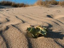 Alone In The Beach. Beach landscape showing dune vegetation, shot in south Spain Stock Images