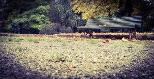 Alone Bench Stock Photo