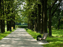 Alone bench in park Royalty Free Stock Photo