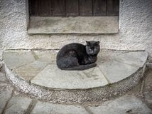 Alone black cat outside the door. Cute cats. royalty free stock image