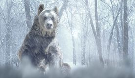 Alone brown bear and snow in a winter forest mountain. Nature and wildlife concept with empty copy space