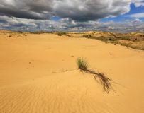 Alone bush in sands Royalty Free Stock Photos
