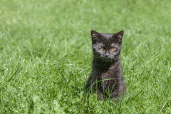 ALONE CAT ON GREEN GRASS. Lovely black cat is sitting alone in green grass Stock Image