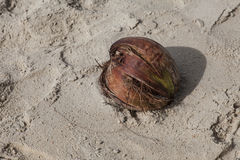 Alone. Coconut abandoned on the beach stock image