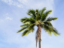 Alone Coconut Tree. Photo Taken on: 05/07/2013 Royalty Free Stock Photos