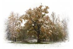 Alone Crowat The Oak