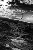Alone in the dark. B&W landscape with a lone tree Royalty Free Stock Photography