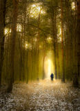 Alone in the dark forest Stock Images
