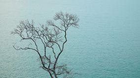 Alone dead tree against sea. Alone dead tree without leaves against blue sea water stock footage