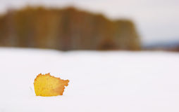 Alone dead yellow leaf on fresh snow and remote forest Royalty Free Stock Photography