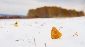 Alone dead yellow leaf on fresh snow and remote forest Stock Images