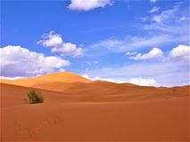 ALONE IN THE DESERT OF MERZOUGA IN MOROCCO. FINDING MYSELF Royalty Free Stock Photo