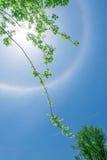 Alone di Sun con gli alberi verdi 2 fotografia stock