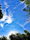 Alone di Sun sulle nuvole e sugli alberi del cielo blu Immagine Stock Libera da Diritti