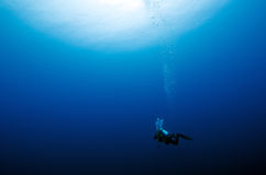 Alone diver in the blue Royalty Free Stock Images