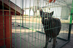 Alone dog in cage Stock Photography