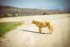 Alone dog on a dirt road royalty free stock images
