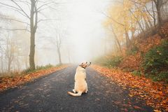Alone dog in mysterious fog Royalty Free Stock Image