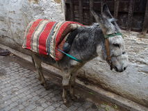 Alone donkey at street in city of FEZ. Cute alone donkey waits with bags at street in city of FEZ FES in MOROCCO on warm and sunny winter day: AFRICA on FEBRUARY Royalty Free Stock Image