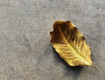 Alone dry  leaf on old dirty cement ground for background Stock Photo