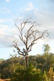 Alone dry tree Stock Photos
