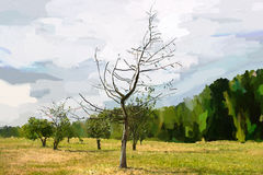 Alone dying tree. Royalty Free Stock Image