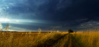 Alone in the field 2. A storm is approaching from north with heavy clouds but sun hasn`t left the horizon yet. Freshly gathered crops left a nice yellow field Royalty Free Stock Photography