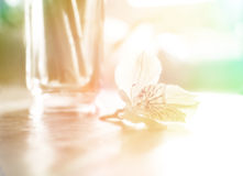 Alone flower Royalty Free Stock Photography