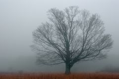 Alone in the Fog. A tree isolated by the heavy fog of an autumn morning. The only tree in an old overgrown farmers field Stock Image
