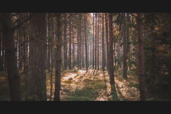 Alone in the Forest Royalty Free Stock Images