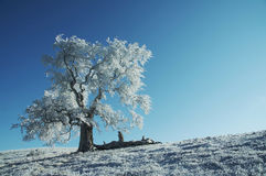 Alone frozen tree Royalty Free Stock Images
