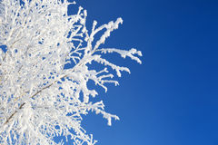 Alone frozen tree in snowy field and  blue sky Royalty Free Stock Photos
