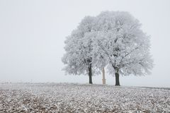 Alone frozen tree in snowy field and mist stock photography