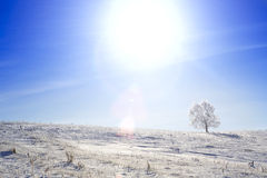 Alone frozen tree on winter field and blue sky Stock Photos