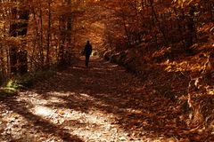 Alone girl walking in the mysterious autumn forest. On the road covered by a leaves. Picture taken in Kashubia region, Poland Stock Photo