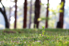 Alone grass. Grass shoots close up in morning Stock Image
