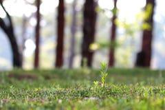 Alone grass Stock Image