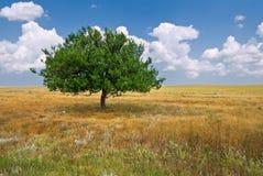 Alone green tree Stock Photography