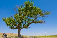 Alone green tree Royalty Free Stock Photography