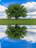 Alone green tree and water reflection. Alone green tree with water reflection in nice spring day Stock Photography