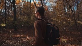 Alone handsome man is going through forest in autumn day, camera moving around. Adult dark haired man is walking in park between naked trees in sunny fall day stock video footage