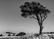 Alone on the hill. This is a well known and much photographed tree located in Priddy on the Mendip hills Royalty Free Stock Photo