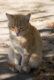 Alone, homless red cat. Adult pet. Close up cat portrait Stock Images