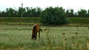 Alone horse eating at a rural field stock video