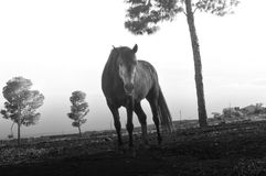 Alone Horse On Village stock image