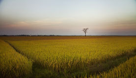Alone!. I took this when visiting a small village in Phu Yen province - one of the most beautiful provinces in Vietnam. in the harvest season Stock Photography
