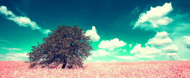 Alone infrared tree landscape Royalty Free Stock Photos