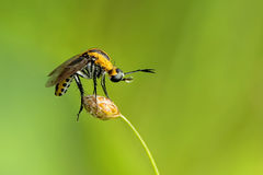 Alone. Insects are living things from a group of Invertebrate Animals, class Insecta, which has the highest number of species. In mainland habitats, insects most Stock Image