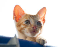 Alone kitten Royalty Free Stock Photo