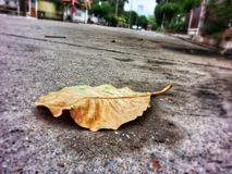 Alone leave. Leaf on street alone Stock Photo